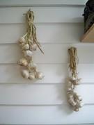 Garlic plaits