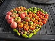 love my tomatoes