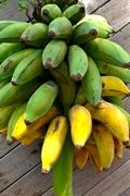 bananasinthegarden