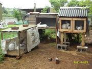 The Rabbit Farm