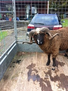 My ram