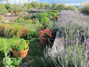 gardenday92012