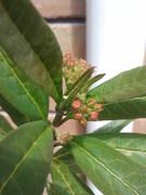 Monarch Butterfly Eggs!
