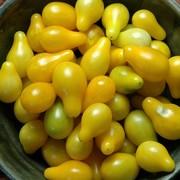 20131 Harvest