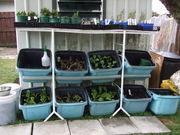 Salad Bar/ Potting Up Area