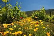 wine_tour_al_valle_de_casablanca_chile