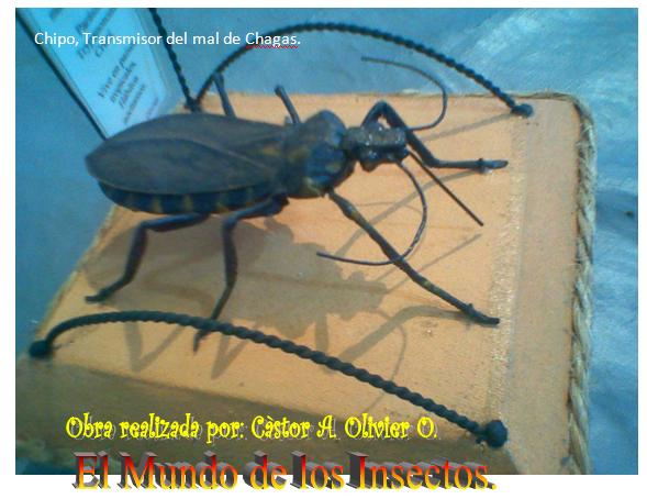 Chipo. TRANSMISOR DEL MAL DE CHAGAS.