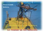 avispa, Tocando Guitarra.