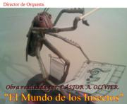 Director d Orquesta.
