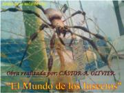 Araña seda de Oro.