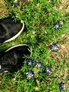 Spring Footshot
