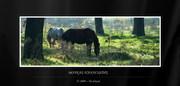 Ζώα, Ερπετά - Animals, Reptiles