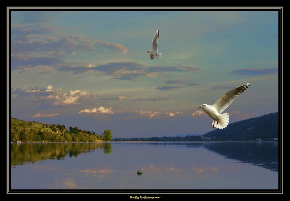 Τα φτερά της ηρεμίας