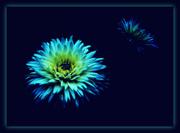 Μπλε μελαγχολία...
