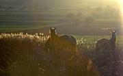 Wild Horses……..