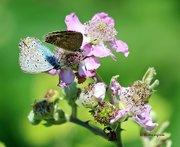 Δροσοσταλίδες Καλοκαιρινές!(Summer dewdrops ...!)