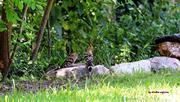 Ζευγαρώματα στην δροσιά του Κόσυνθου......