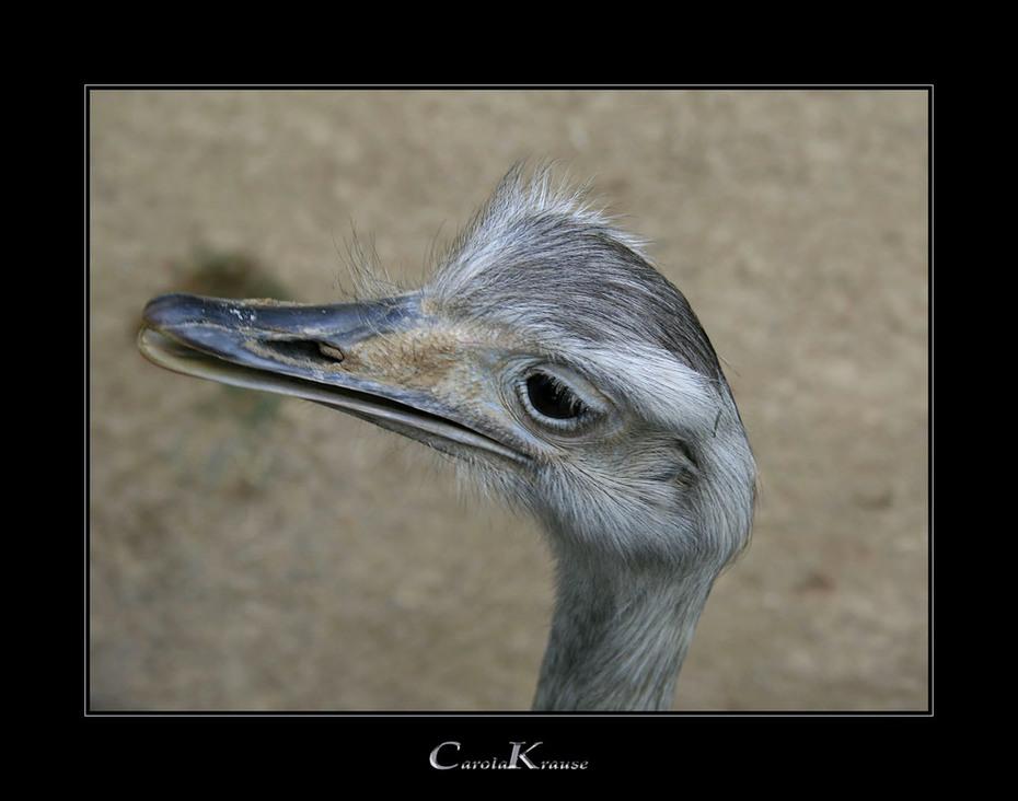 Contemplative Rhea
