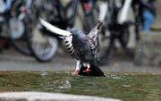 Στην Πόλη της Ειρήνης και των Ποδηλάτων....Το Μύστερν.....