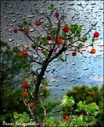 Οταν η βροχή ψιθυρίζει παραμύθια