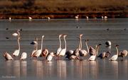 Τα πουλιά στην Βιστωνίδα κάνουν πάρτι.