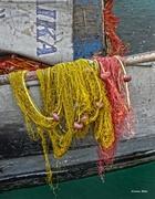 Τα δίχτυα