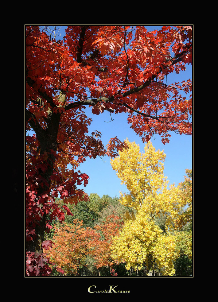 Autumnal Color Explosion