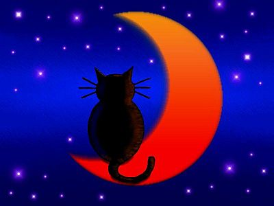 Cat on Moon