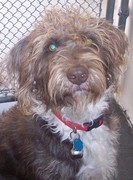 Delilah, DRC rescue from CA