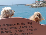 Clancy and Ned benched at Oceanside Harbor