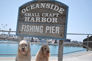 Clancy and Ned at Oceanside Harbor