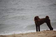 Rocky enjoying the surf