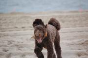 Rocky Loves the beach!