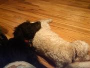resting together