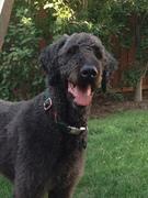 Teddy (Eddie) in the back yard one year after adoption