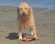 CLANCY  -  BEACH DAY
