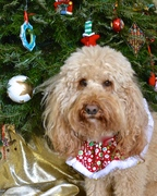 Ned at Christmas 2015