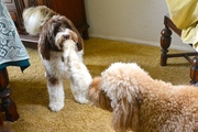 Ned and Charlie Playing Tug