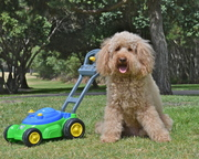 WANT YOUR LAWN MOWED?