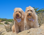 Ned and Clancy on the Central Coast