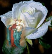 Una Avé Maria,   una rosa a laMaria Santisima.