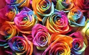 moldes de rosas coloridas