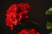 წითელი