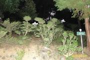 იაპონური ბაღი
