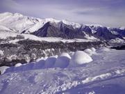 თოვლის სოკოები