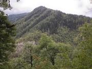 შერეული ტყე