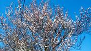 გაზაფხულის უღრუბლო ცა
