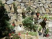 კედლის ბაღი