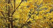 Осенний Клондайк