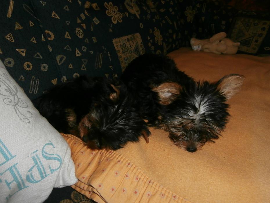 Sissi und Lola
